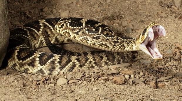 Sảy chân ngã xuống hố, người đàn ông chống lại cả bầy rắn đuôi chuông để sống sót suốt 3 ngày - Ảnh 4.