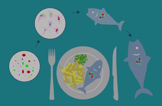 Nghiên cứu đầu tiên chứng minh cơ thể con người chúng ta đã xuất hiện hạt vi nhựa do ăn hải sản bị ô nhiễm - Ảnh 2.