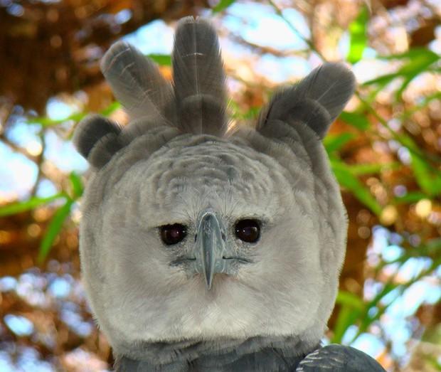 10 con vật có ngoại hình kỳ dị mà chẳng mấy khi bạn nhìn thấy trên internet - Ảnh 8.