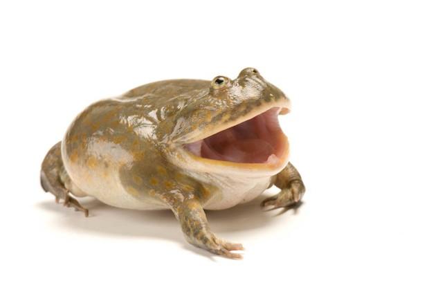 10 con vật có ngoại hình kỳ dị mà chẳng mấy khi bạn nhìn thấy trên internet - Ảnh 11.