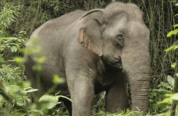 Tại sao khoa học lại phải bỏ ra hàng chục năm trời chỉ để hồi sinh voi ma mút? - Ảnh 3.