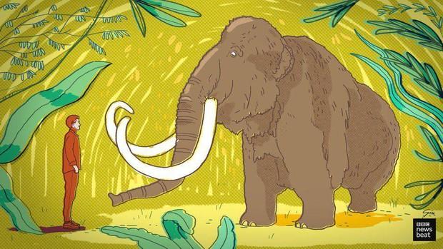 Tại sao khoa học lại phải bỏ ra hàng chục năm trời chỉ để hồi sinh voi ma mút? - Ảnh 2.