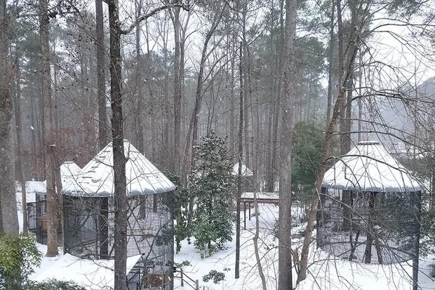 Đã mắt ngắm ngôi trường Đại học đẹp như lâu đài cổ tích dưới trời tuyết trắng xóa - Ảnh 20.