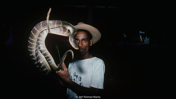 Tộc người rắn kỳ lạ tại Ấn Độ: ngành nghề độc đáo nhưng bị kỳ thị tại chính quê hương của mình - Ảnh 1.