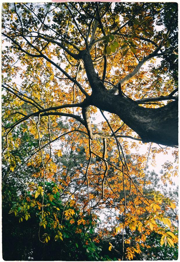 Đây là Đại học duy nhất ở Việt Nam có 1 khu rừng tuyệt đẹp ngay trong khuôn viên trường, tha hồ sống ảo - Ảnh 7.