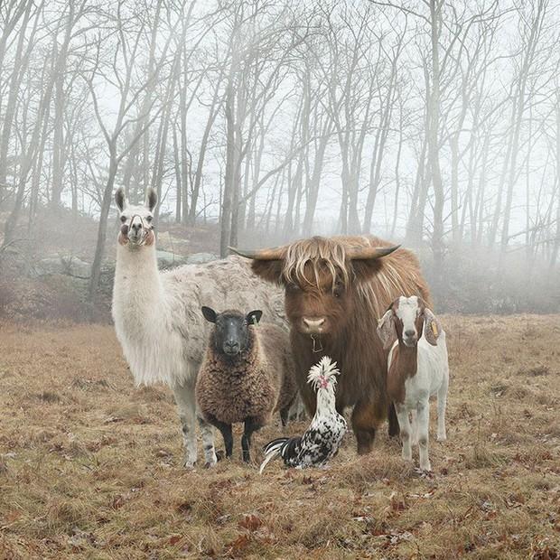 Nhiếp ảnh sáng tạo: Chụp hình động vật theo phong cách boy-band thập niên 90 - Ảnh 2.