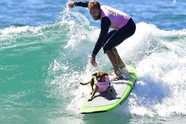 """Hình ảnh những chú chó gây bão mạng với tài lướt sóng như """"dân chơi"""" - Ảnh 3."""