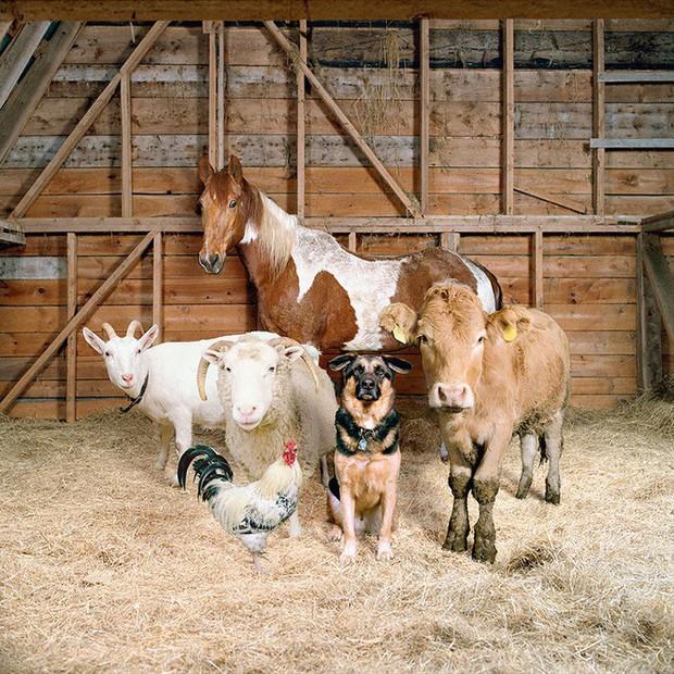 Nhiếp ảnh sáng tạo: Chụp hình động vật theo phong cách boy-band thập niên 90 - Ảnh 5.