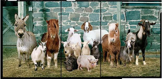 Nhiếp ảnh sáng tạo: Chụp hình động vật theo phong cách boy-band thập niên 90 - Ảnh 6.
