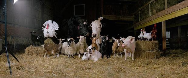 Nhiếp ảnh sáng tạo: Chụp hình động vật theo phong cách boy-band thập niên 90 - Ảnh 7.