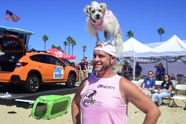 """Hình ảnh những chú chó gây bão mạng với tài lướt sóng như """"dân chơi"""" - Ảnh 8."""