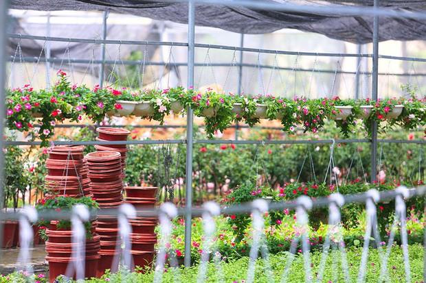 Ngay tại Hà Nội có một ngôi trường rộng gần 200ha, cây cối, hóa trái phủ xanh khắp nơi như rừng nhiệt đới - Ảnh 9.