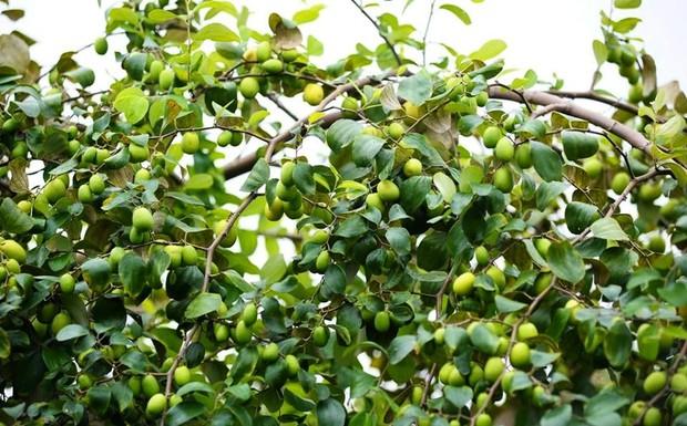 Ngay tại Hà Nội có một ngôi trường rộng gần 200ha, cây cối, hóa trái phủ xanh khắp nơi như rừng nhiệt đới - Ảnh 19.