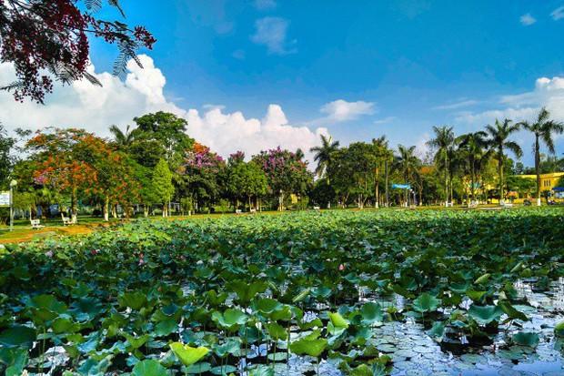 Ngay tại Hà Nội có một ngôi trường rộng gần 200ha, cây cối, hóa trái phủ xanh khắp nơi như rừng nhiệt đới - Ảnh 5.