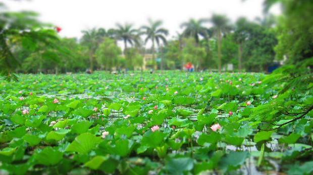 Ngay tại Hà Nội có một ngôi trường rộng gần 200ha, cây cối, hóa trái phủ xanh khắp nơi như rừng nhiệt đới - Ảnh 6.