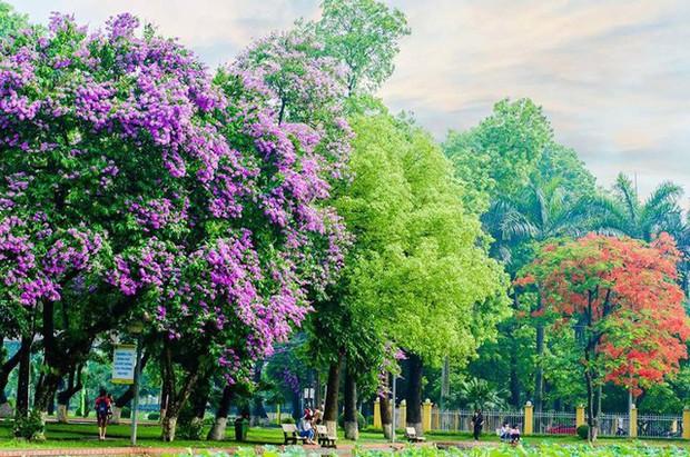 Ngay tại Hà Nội có một ngôi trường rộng gần 200ha, cây cối, hóa trái phủ xanh khắp nơi như rừng nhiệt đới - Ảnh 4.