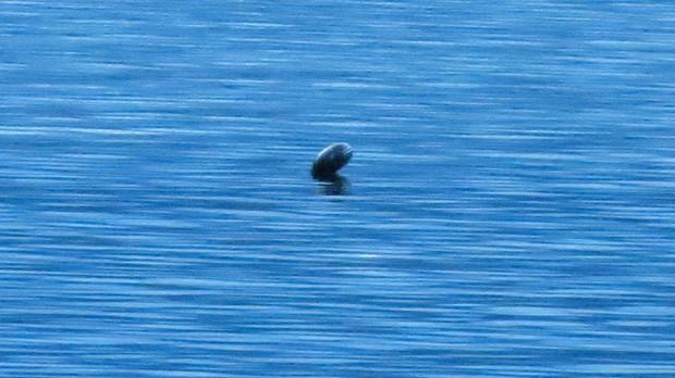 Sinh vật bí ẩn giống quái vật hồ Loch Ness xuất hiện ở hồ nước Canada - Ảnh 1.