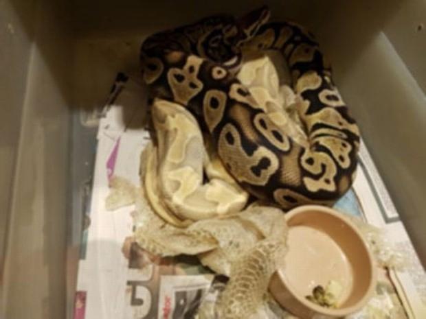 Người đàn ông bị phạt tù vì nuôi nhốt 23 con rắn và 1 con cá sấu trong căn hộ nhỏ rồi bỏ mặc chúng chết đói - Ảnh 2.