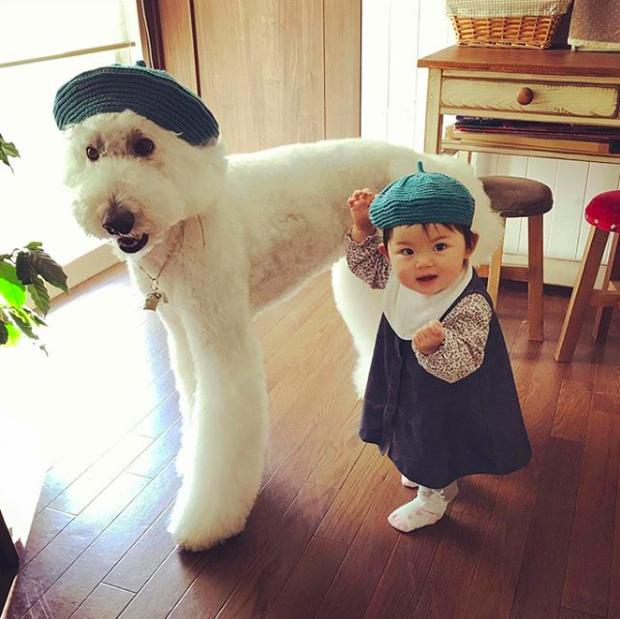Em bé Nhật Bản nhỏ xíu bên chú Poodle to đùng là cặp đôi ngôi sao mới nổi trên Instagram - Ảnh 1.