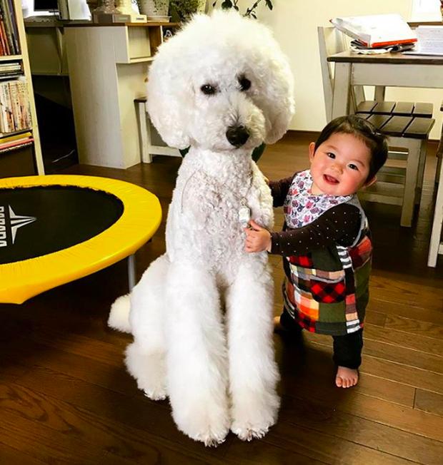 Em bé Nhật Bản nhỏ xíu bên chú Poodle to đùng là cặp đôi ngôi sao mới nổi trên Instagram - Ảnh 6.