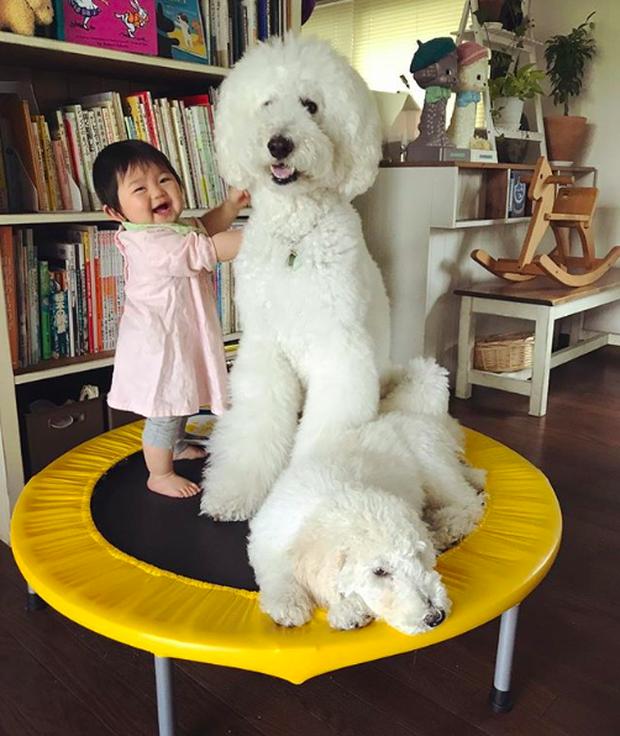 Em bé Nhật Bản nhỏ xíu bên chú Poodle to đùng là cặp đôi ngôi sao mới nổi trên Instagram - Ảnh 7.