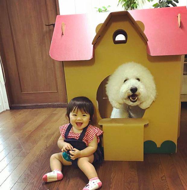 Em bé Nhật Bản nhỏ xíu bên chú Poodle to đùng là cặp đôi ngôi sao mới nổi trên Instagram - Ảnh 8.