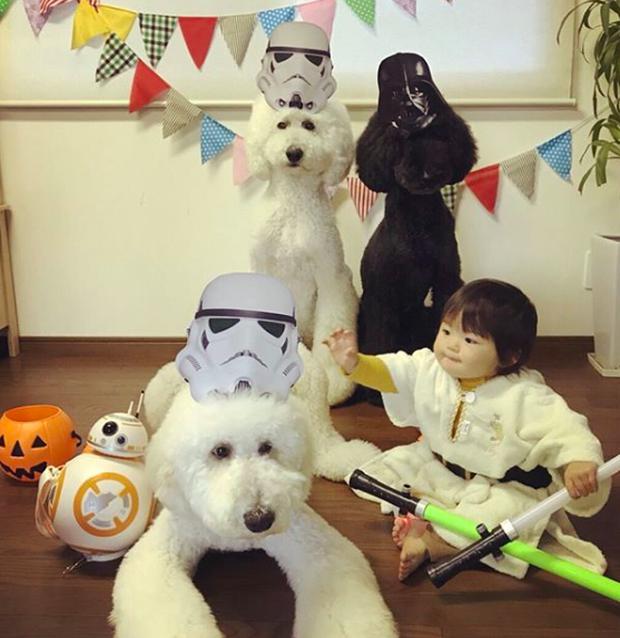 Em bé Nhật Bản nhỏ xíu bên chú Poodle to đùng là cặp đôi ngôi sao mới nổi trên Instagram - Ảnh 11.
