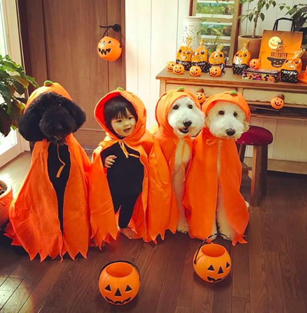 Em bé Nhật Bản nhỏ xíu bên chú Poodle to đùng là cặp đôi ngôi sao mới nổi trên Instagram - Ảnh 12.