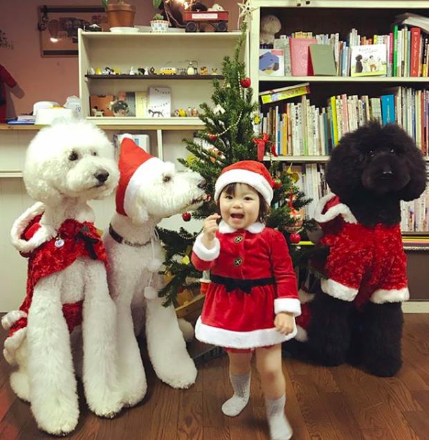 Em bé Nhật Bản nhỏ xíu bên chú Poodle to đùng là cặp đôi ngôi sao mới nổi trên Instagram - Ảnh 13.