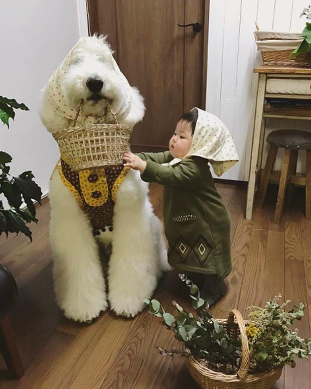 Em bé Nhật Bản nhỏ xíu bên chú Poodle to đùng là cặp đôi ngôi sao mới nổi trên Instagram - Ảnh 14.
