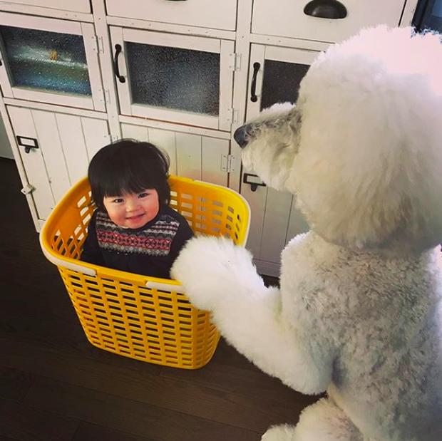 Em bé Nhật Bản nhỏ xíu bên chú Poodle to đùng là cặp đôi ngôi sao mới nổi trên Instagram - Ảnh 15.