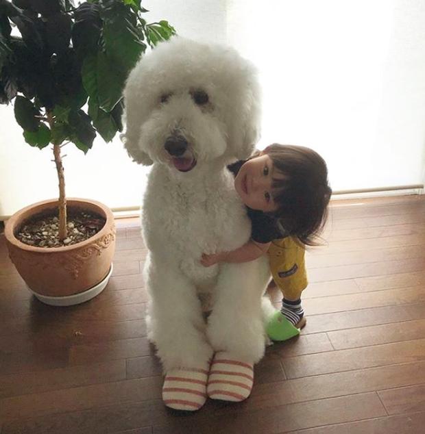 Em bé Nhật Bản nhỏ xíu bên chú Poodle to đùng là cặp đôi ngôi sao mới nổi trên Instagram - Ảnh 16.