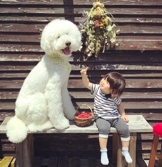 Em bé Nhật Bản nhỏ xíu bên chú Poodle to đùng là cặp đôi ngôi sao mới nổi trên Instagram - Ảnh 18.