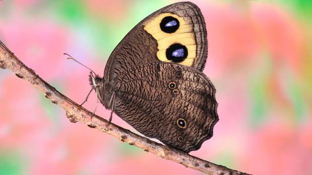 Đố bạn biết tai của con bướm nằm ở đâu? - Ảnh 1.