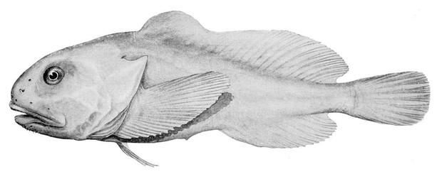 Hóa ra từ trước đến nay chúng ta đã bị con cá xấu nhất hành tinh này lừa rồi - Ảnh 3.