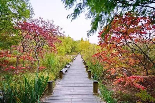 Ngất ngây ngắm trọn những trường Đại học có mùa thu đẹp nhất Trung Quốc - Ảnh 2.