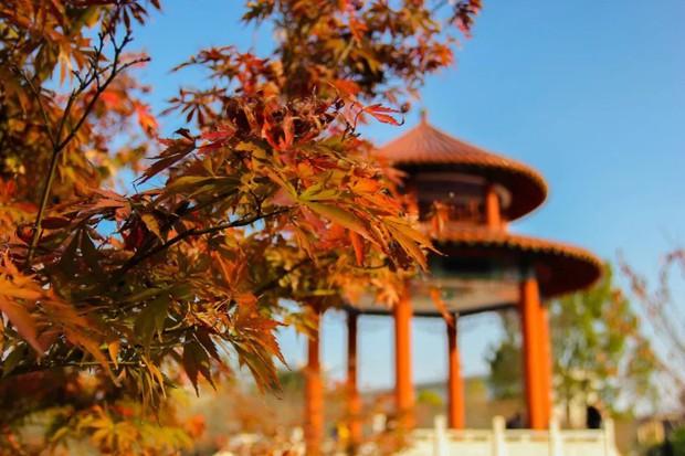 Ngất ngây ngắm trọn những trường Đại học có mùa thu đẹp nhất Trung Quốc - Ảnh 12.
