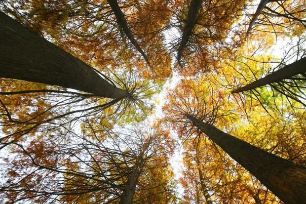Ngất ngây ngắm trọn những trường Đại học có mùa thu đẹp nhất Trung Quốc - Ảnh 13.