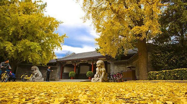 Ngất ngây ngắm trọn những trường Đại học có mùa thu đẹp nhất Trung Quốc - Ảnh 15.
