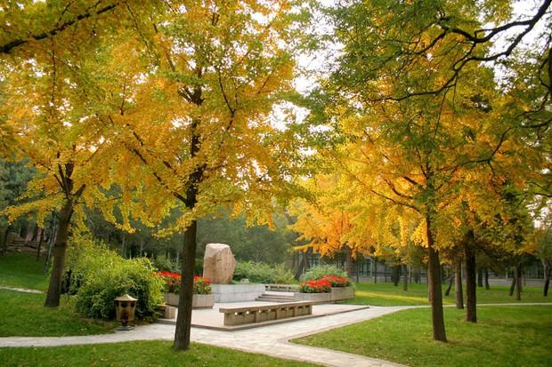 Ngất ngây ngắm trọn những trường Đại học có mùa thu đẹp nhất Trung Quốc - Ảnh 16.