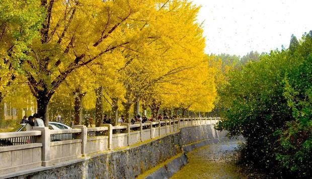 Ngất ngây ngắm trọn những trường Đại học có mùa thu đẹp nhất Trung Quốc - Ảnh 17.