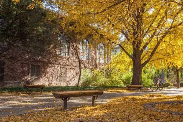 Ngất ngây ngắm trọn những trường Đại học có mùa thu đẹp nhất Trung Quốc - Ảnh 18.