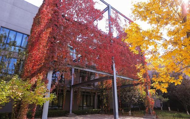Ngất ngây ngắm trọn những trường Đại học có mùa thu đẹp nhất Trung Quốc - Ảnh 20.