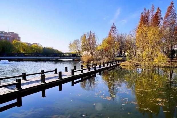 Ngất ngây ngắm trọn những trường Đại học có mùa thu đẹp nhất Trung Quốc - Ảnh 3.