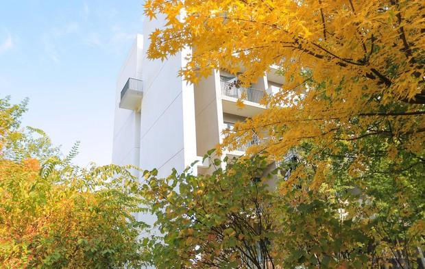 Ngất ngây ngắm trọn những trường Đại học có mùa thu đẹp nhất Trung Quốc - Ảnh 21.
