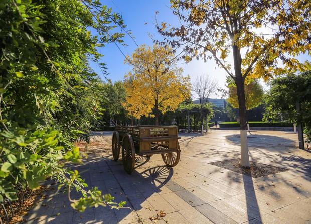Ngất ngây ngắm trọn những trường Đại học có mùa thu đẹp nhất Trung Quốc - Ảnh 22.