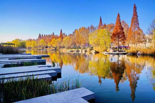 Ngất ngây ngắm trọn những trường Đại học có mùa thu đẹp nhất Trung Quốc - Ảnh 4.