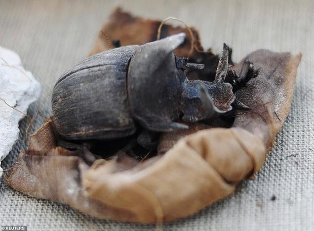 Cận cảnh xác ướp bọ hung và mèo bên trong ngôi mộ Ai Cập 4.500 năm tuổi - Ảnh 6.