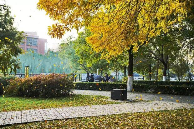 Ngất ngây ngắm trọn những trường Đại học có mùa thu đẹp nhất Trung Quốc - Ảnh 8.