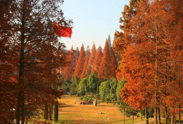 Ngất ngây ngắm trọn những trường Đại học có mùa thu đẹp nhất Trung Quốc - Ảnh 10.